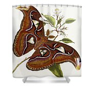 Lepidoptera Shower Curtain by Edward Donovan