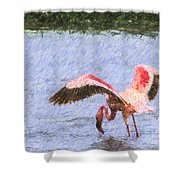 Lesser Flamingo Filter Feeding Lake Nakuru Kenya Shower Curtain