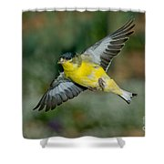 Lesser Goldfinch Male-flying Shower Curtain