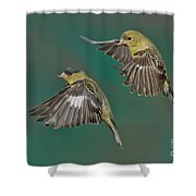 Lesser Goldfinch Pair In The Air Shower Curtain