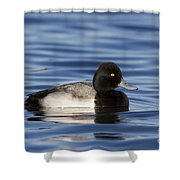 Lesser Scaup Shower Curtain