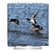 Lesser Scaup Ducks Shower Curtain