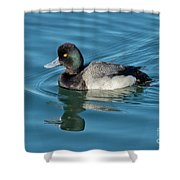 Lesser Scaup Male Swimming Shower Curtain
