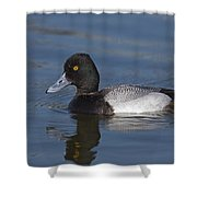 Lesser Scaup Male Shower Curtain