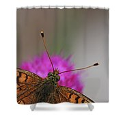 Lesser Spotted Fritillary Shower Curtain by Amos Dor