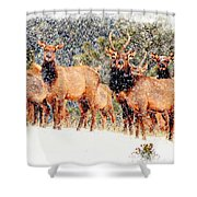 Let It Snow - Barbara Chichester Shower Curtain