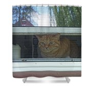 Let Me Out Cat Picture Shower Curtain