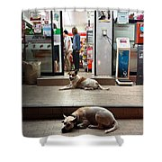 Let Sleeping Dogs Lie Where They May Shower Curtain