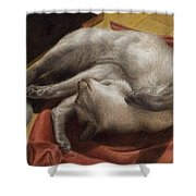 Let Sleeping Kitties Lie Shower Curtain
