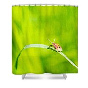 Let World Be Live Shower Curtain