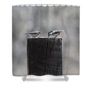 Let's Eat Shower Curtain