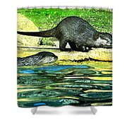 Lets Play And Swim Shower Curtain