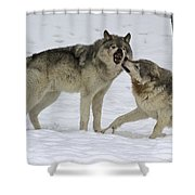 Lets Play... Shower Curtain