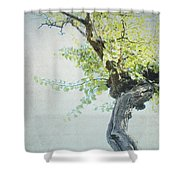 Letters From Anacapri - Italy Shower Curtain