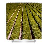 Lettuce Farming Shower Curtain