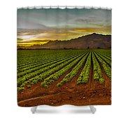 Lettuce Sunrise Shower Curtain