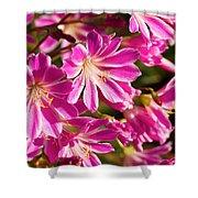 Lewisia Cotyledon Flowers Shower Curtain