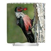 Lewiss Woodpecker With Fruit In Beak Shower Curtain