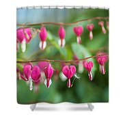 Liberal Supply Of Bleeding Hearts Shower Curtain