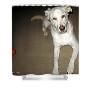 Liberty The Dog And Her Ball Shower Curtain