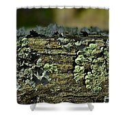 Lichen Macro I Shower Curtain