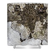 Lichen Mosaic Shower Curtain