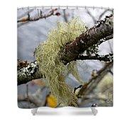 Lichen On Tree Shower Curtain