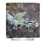 Lichens 2013 Shower Curtain