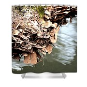 Lichens Abstract 2013 Shower Curtain