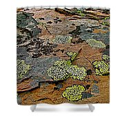 Lichens Along Trail To Plain Of Six Glaciers In Banff National Park-alberta-canada Shower Curtain