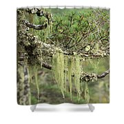 Lichens On Tree Branches In The Scottish Highlands Shower Curtain