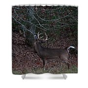 Licking Branch Shower Curtain
