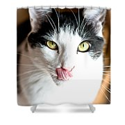 Licking His Chops Shower Curtain
