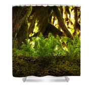Licorice Fern Shower Curtain