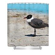 Lido Gull Shower Curtain