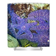 Life Among The Stars Shower Curtain