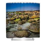 Life Clings As The Tides Ebb Shower Curtain