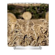 Life Cycle Of Wheat - Harvesting Shower Curtain