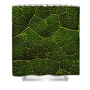 Life Grid In A Leaf Shower Curtain