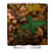 Life On A Vine Shower Curtain