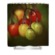 Life Savour  Shower Curtain