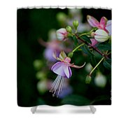 Life's Quiet Moments Shower Curtain