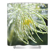 Light Catchers Shower Curtain