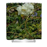 Light Daffodils Shower Curtain