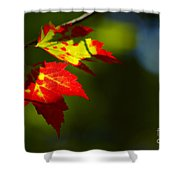 Light Gives Us All A Chance Shower Curtain by Aimelle