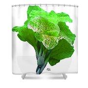 Light Green Iris Shower Curtain