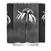 Light Of Day In Black And White Shower Curtain