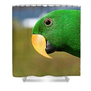 Light Of Love - Eclectus Parrot Shower Curtain