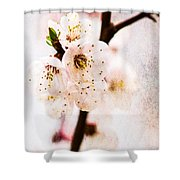 Light Of Spring 3 Shower Curtain