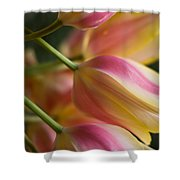 Light Of Spring Shower Curtain